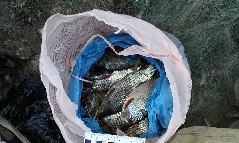 Ловля рыбы без лицензии уголовная ответственность