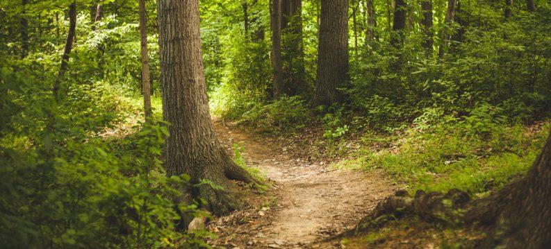forest-1868028_1920-e1530884260254-793x359.jpg