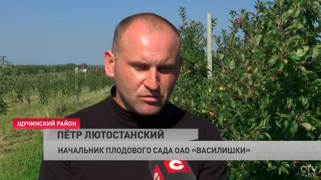 kak_v_belarusi_idyot_sbor_yablok_08_09_2021_9.jpg
