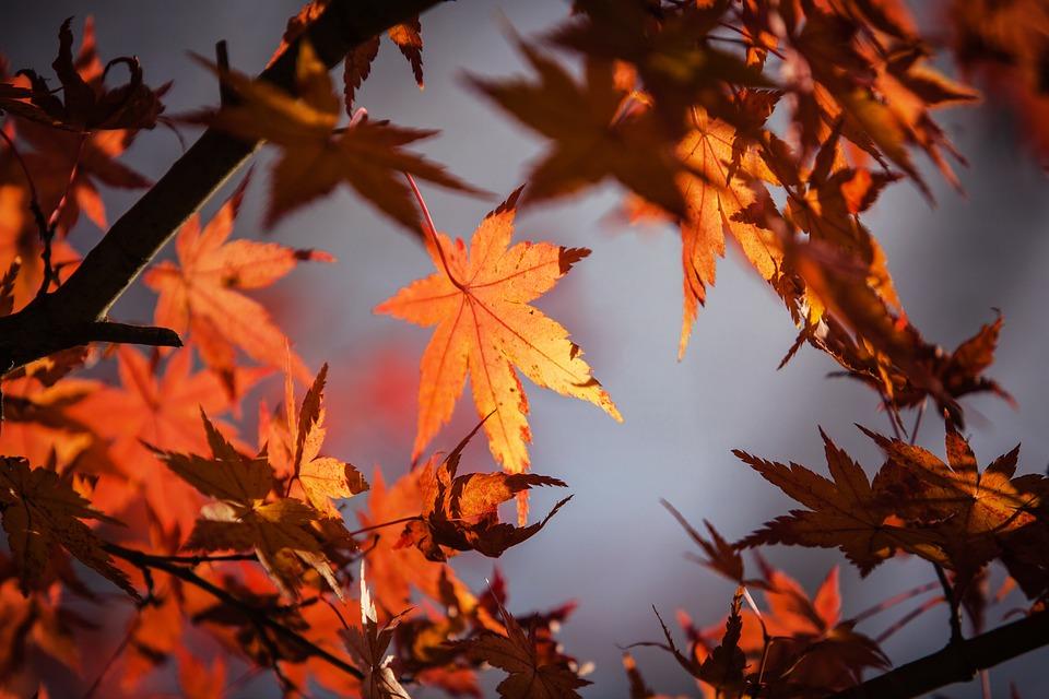autumn-leaves-1415541_960_720.jpg