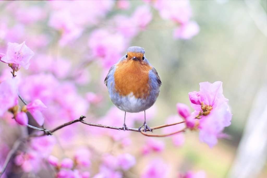 bird-2295436_1920.jpg