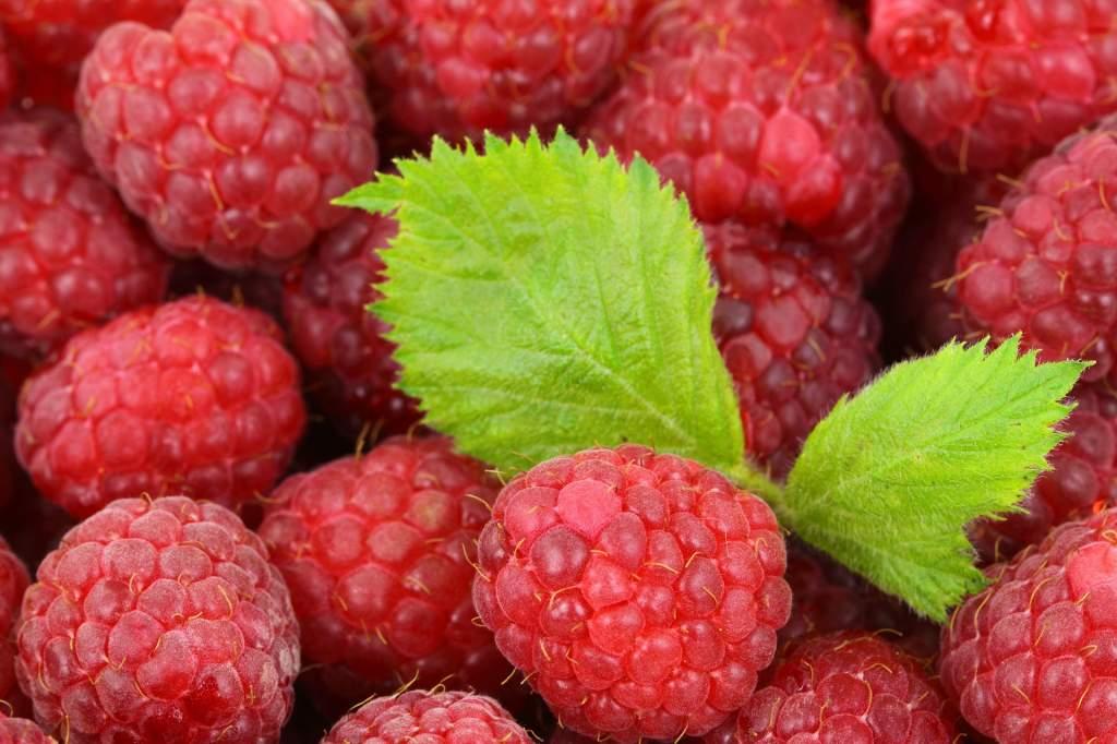 berries-2276_1920.jpg