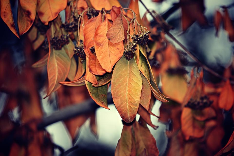 leaves-3616878_960_720.jpg