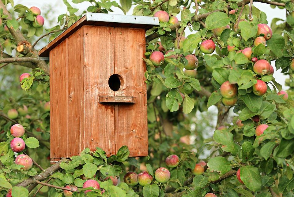 birdhouse-1537806_960_720.jpg
