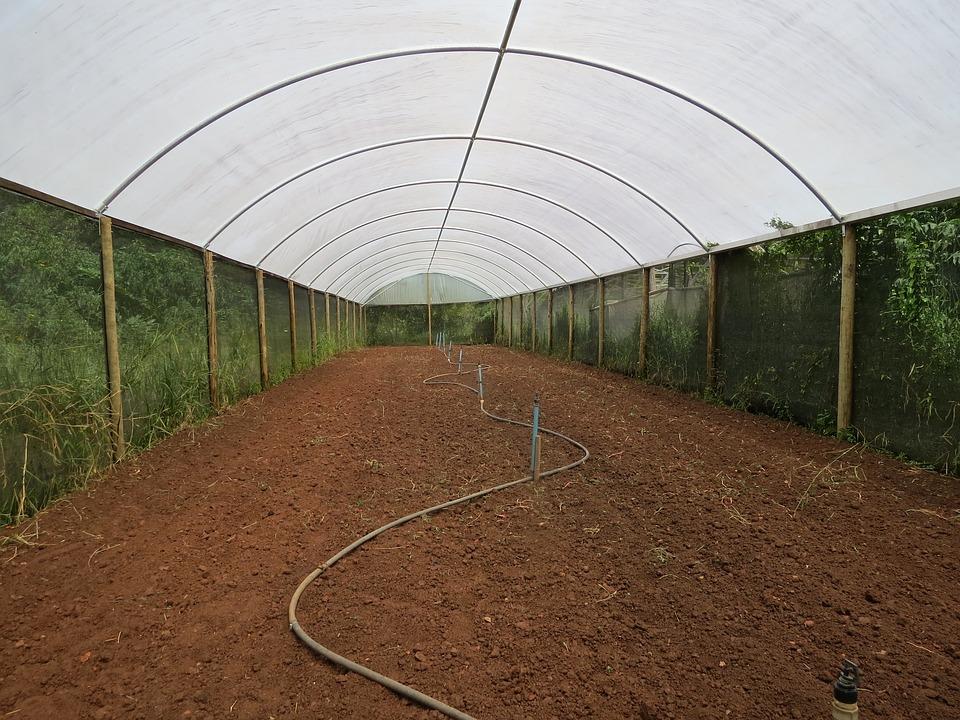 greenhouse-2402453_960_720.jpg
