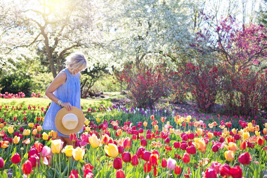 spring-2298280_1280-900x600.jpg