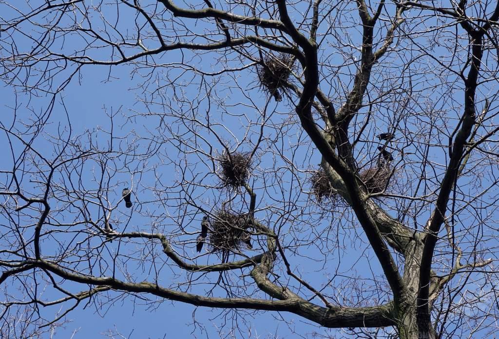 birds-nest-1270949_1920.jpg
