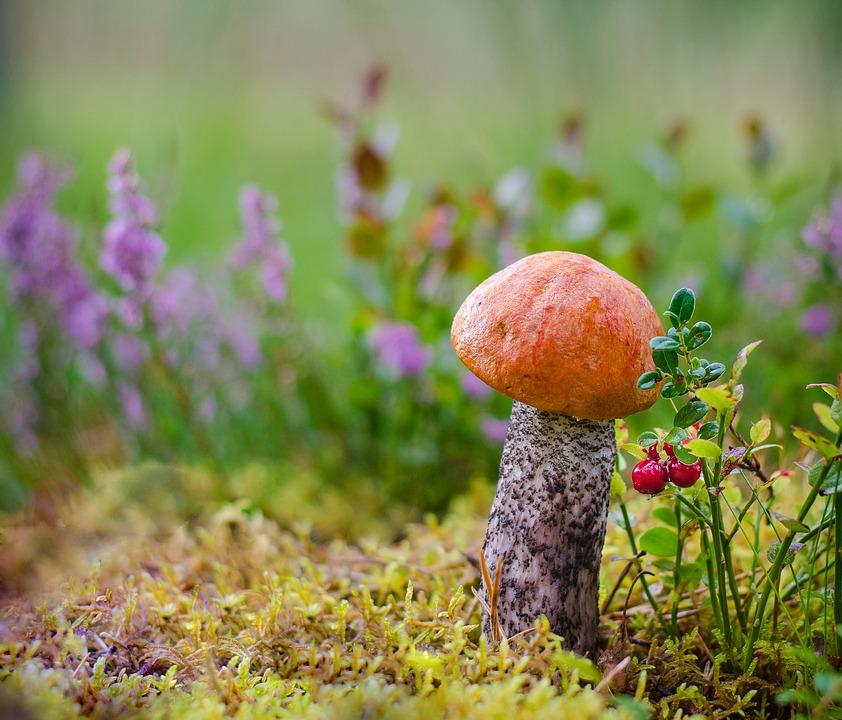 mushrooms-2162100_960_720.jpg