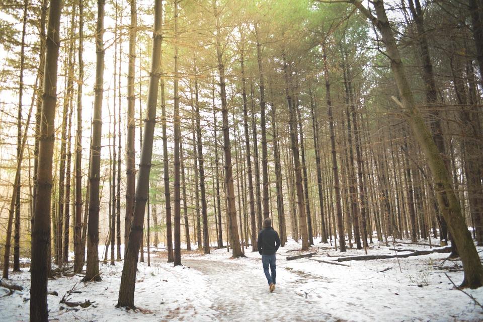 woods-690939_960_720.jpg