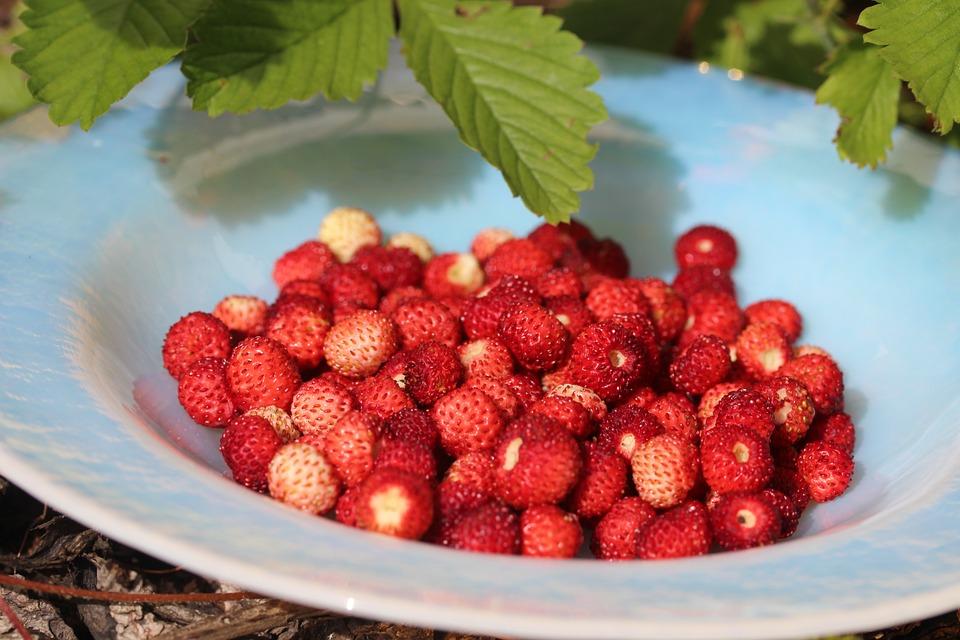 wild-strawberry-388673_960_720.jpg