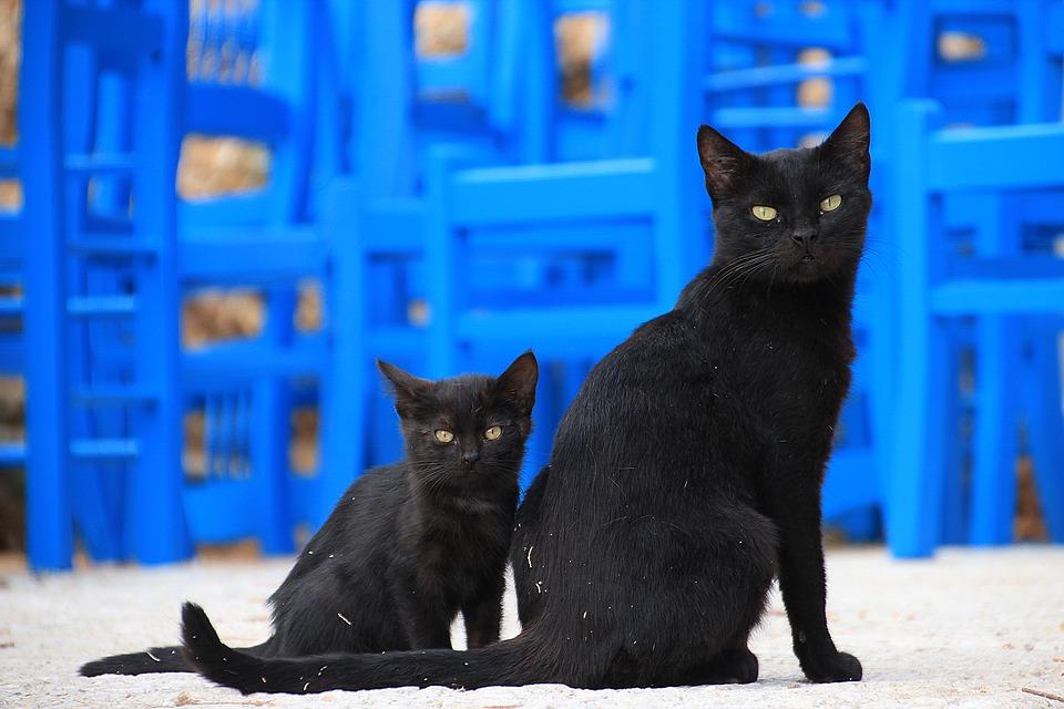 cat-1165112_960_720.jpg