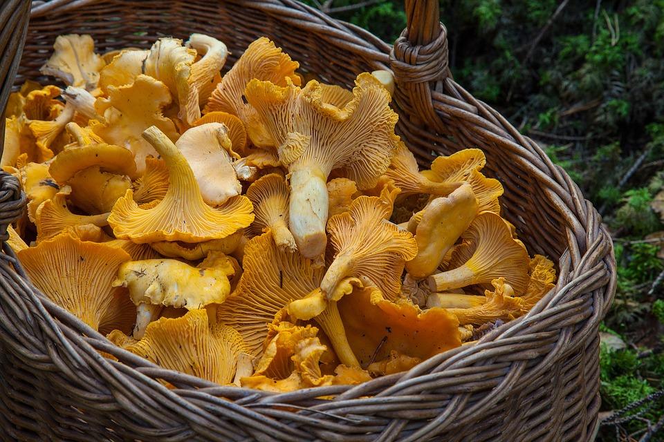fungus-1194380_960_720.jpg