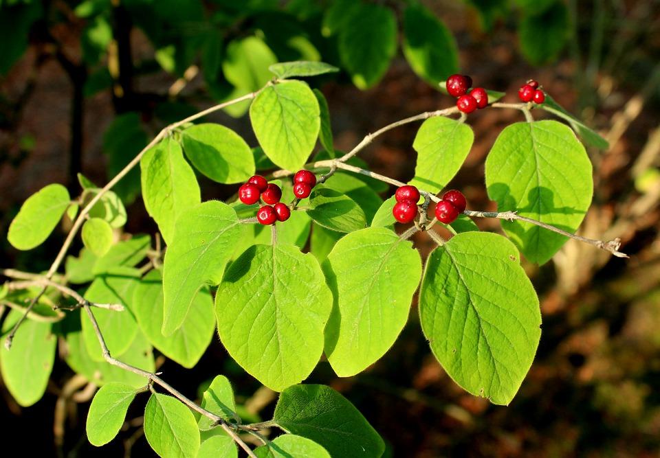 bush-4377183_960_720.jpg