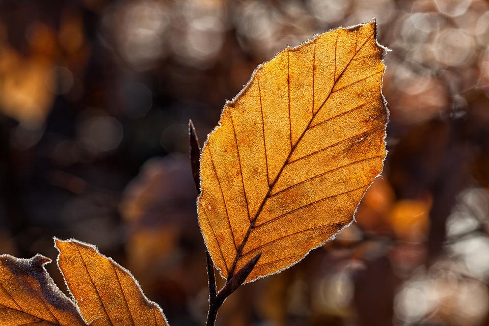 leaves-1698874_960_720.jpg