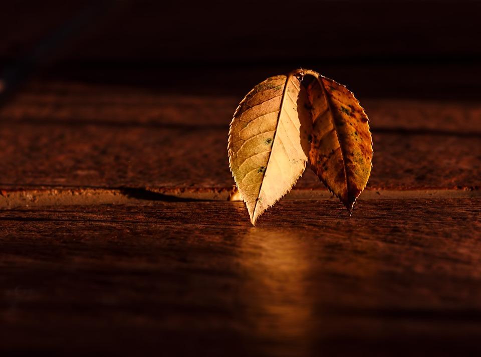 leaf-409258_960_720.jpg