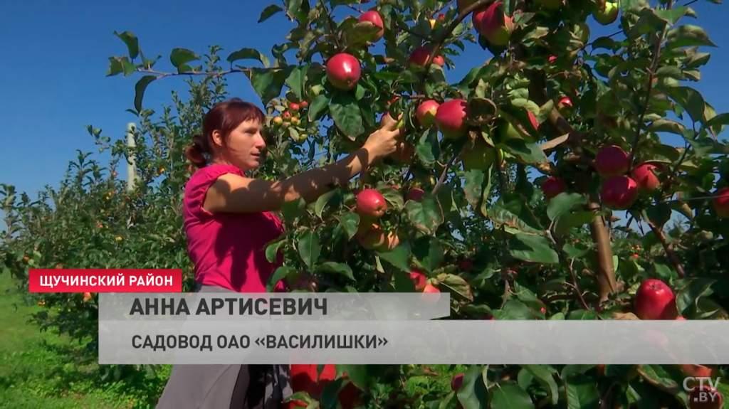 kak_v_belarusi_idyot_sbor_yablok_08_09_2021_7.jpg
