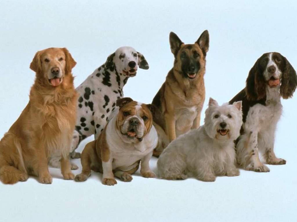 Animals_Dogs__001810_1.jpg