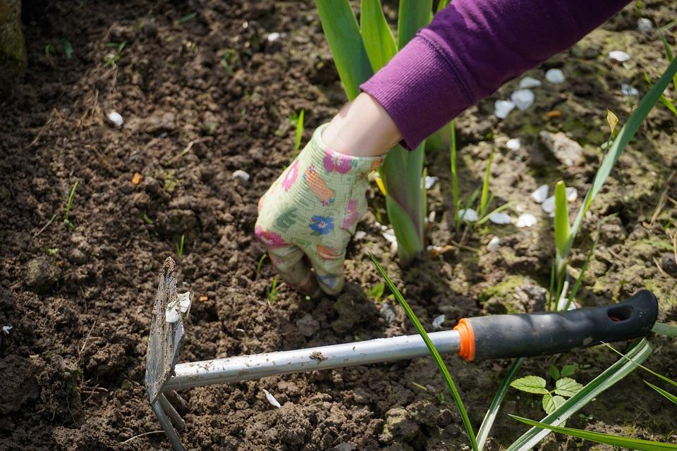 work-in-the-garden-2432111_960_720.jpg