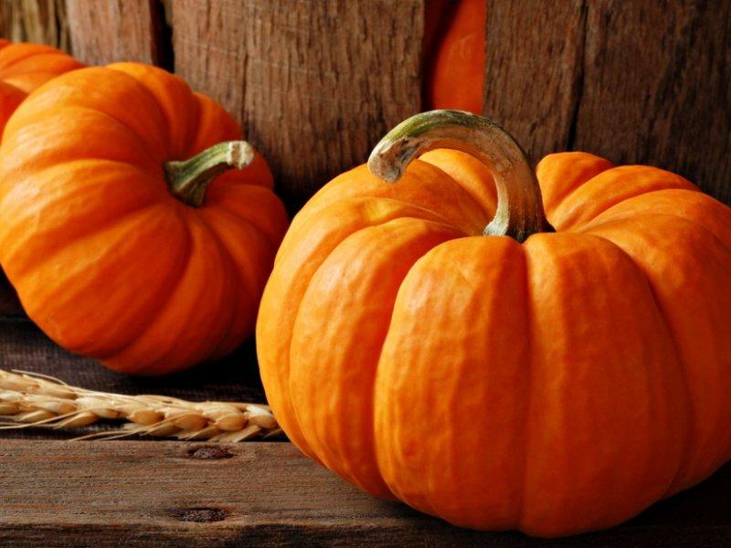 1571371431_pumpkin-polza-1.jpg