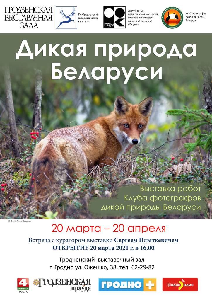 постер а3 лиса.jpg