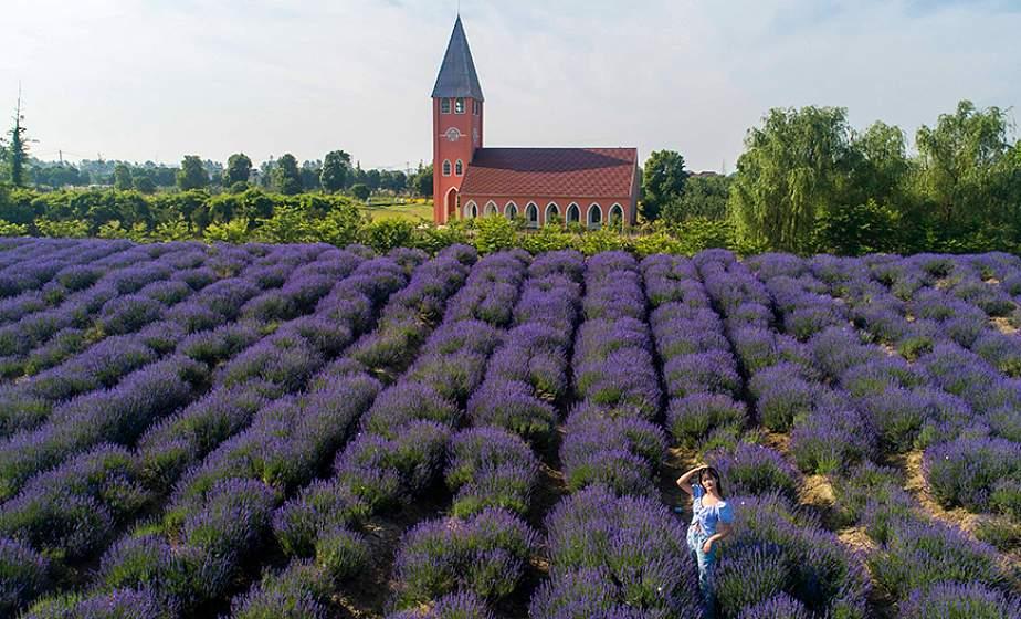 ФОТОФАКТ: На востоке Китая цветут поля лаванды