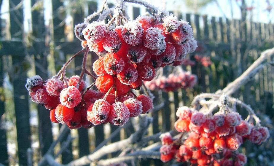 До -10°С ожидается в Беларуси 25 ноября