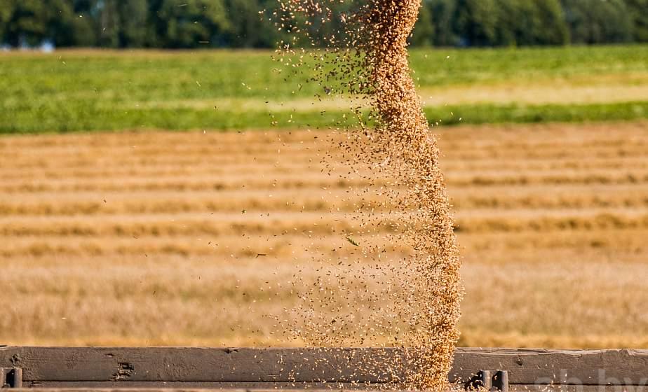 Министр сельского хозяйства: урожай будет намного выше уровня 2019 года (+видео)