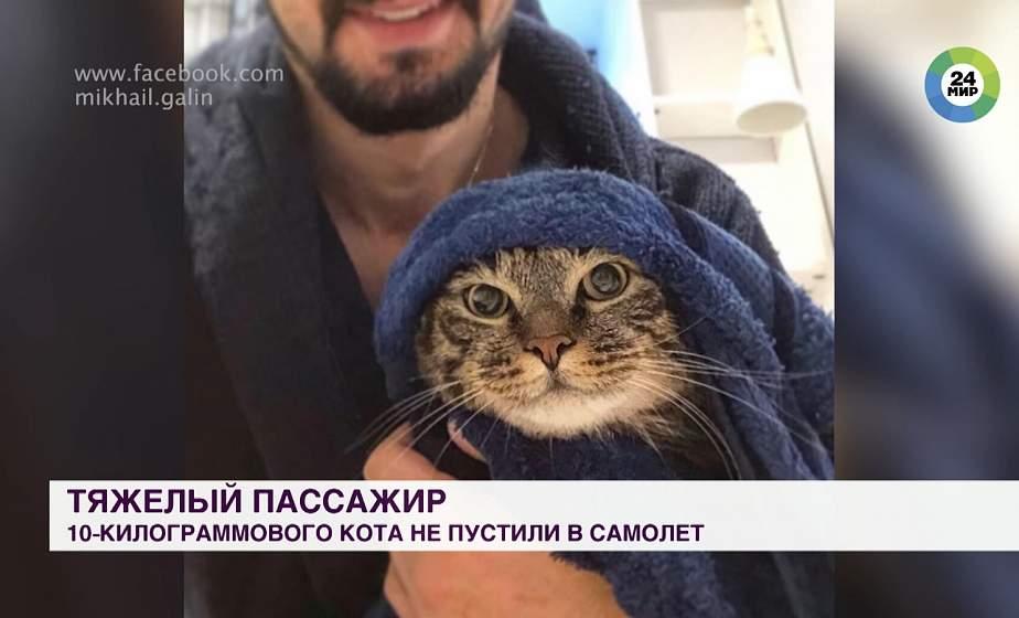 Тяжелый пассажир: десятикилограммового кота не пустили в самолет