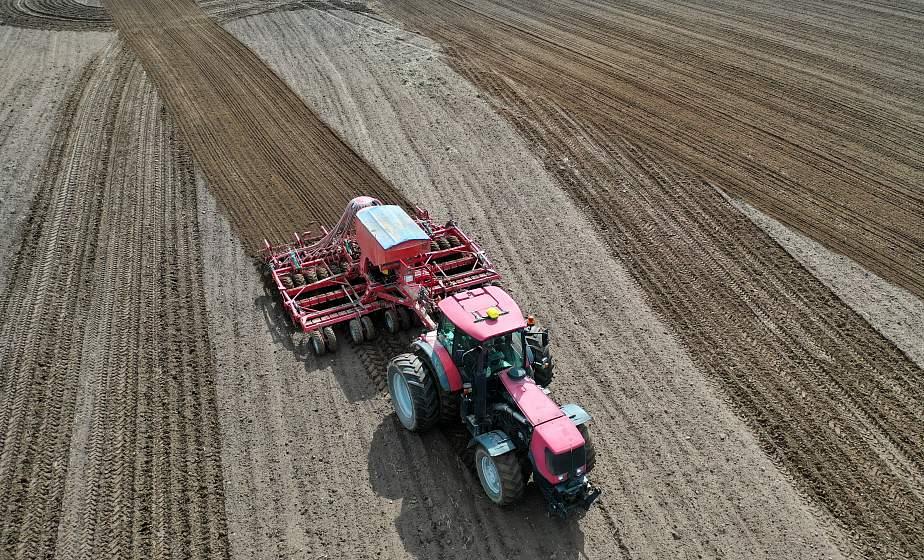 Многолетние травы, кукуруза, лен. Как готовят семена для посевной в Гродненской области?