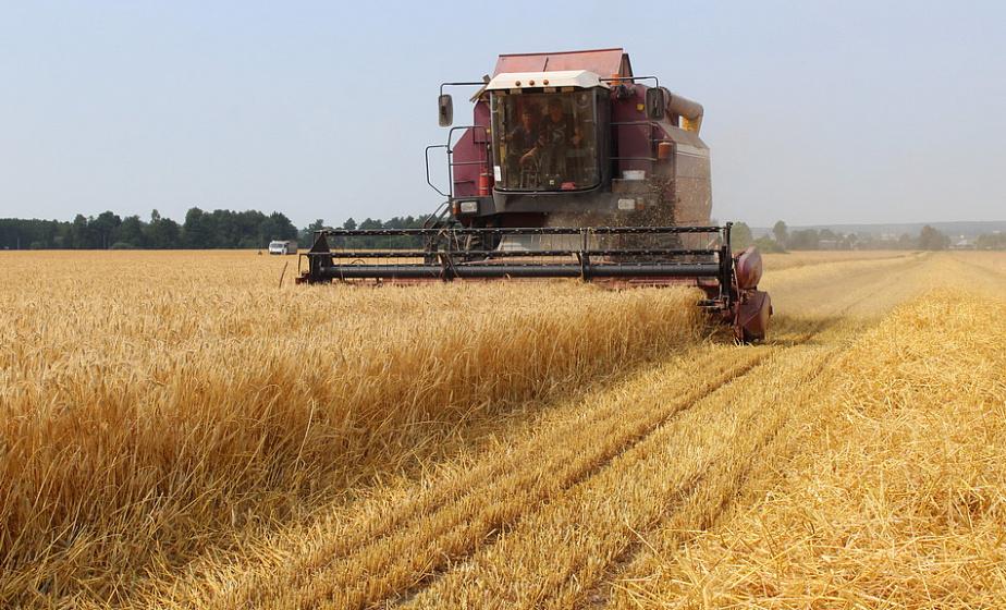 Жатва на Гродненщине идет хорошими темпами – на утро 31 июля зерновые и зернобобовые культуры убраны на 57% площадей, или на 183 647 гектарах (+инфографика)