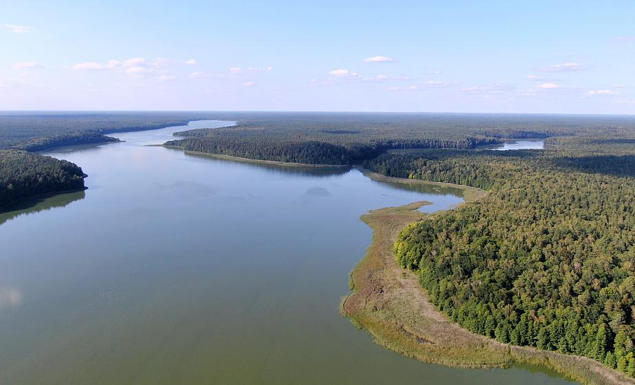 Заказник «Озеры»: по следам могучего зубра и орхидея на Святом болоте. Новая серия из заповедного мира Гродненщины