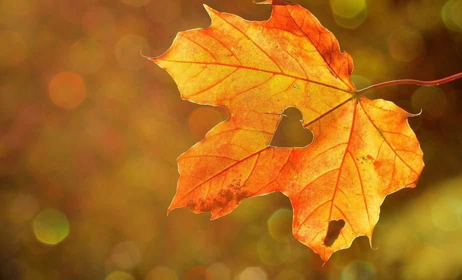 Оранжевый уровень опасности из-за сильного ветра объявлен в Беларуси 3 сентября