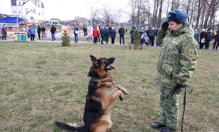 Быстрые и сильные: на «Дажынках» в Сморгони кинологический центр показал, как служебные собаки задерживают преступников