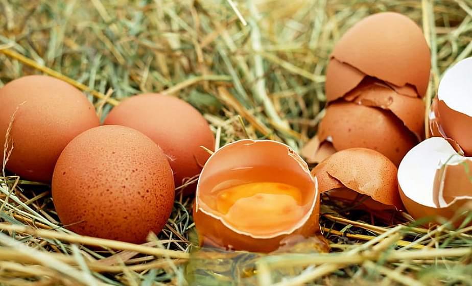 Ученые: куриные яйца помогут предотвратить возрастную слепоту