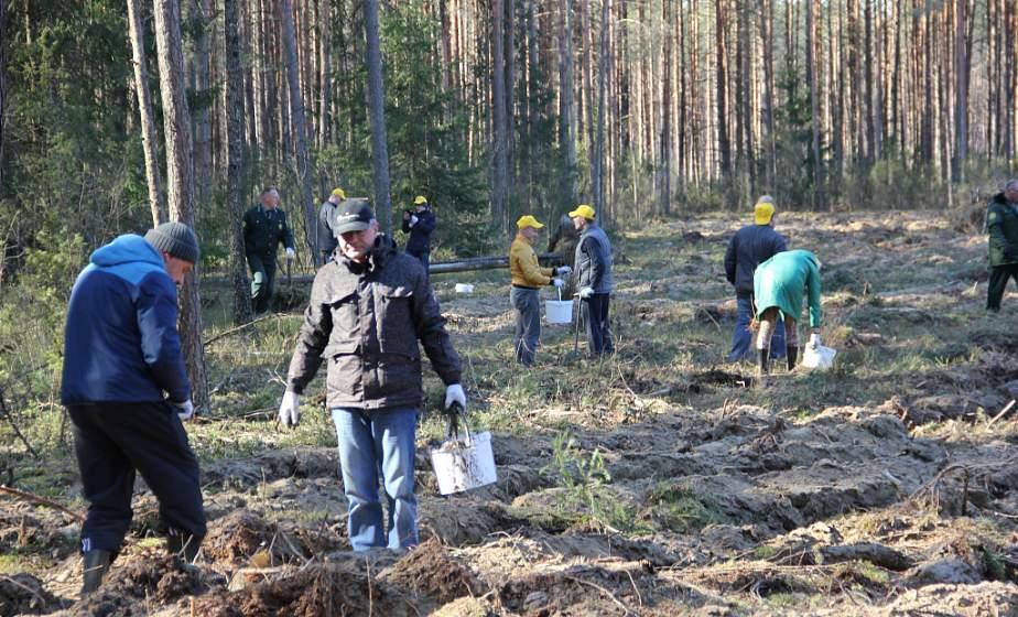 Зашумят молодые леса и аллеи. На Гродненщине в «Неделе леса» примут участие около 8,5 тысячи человек