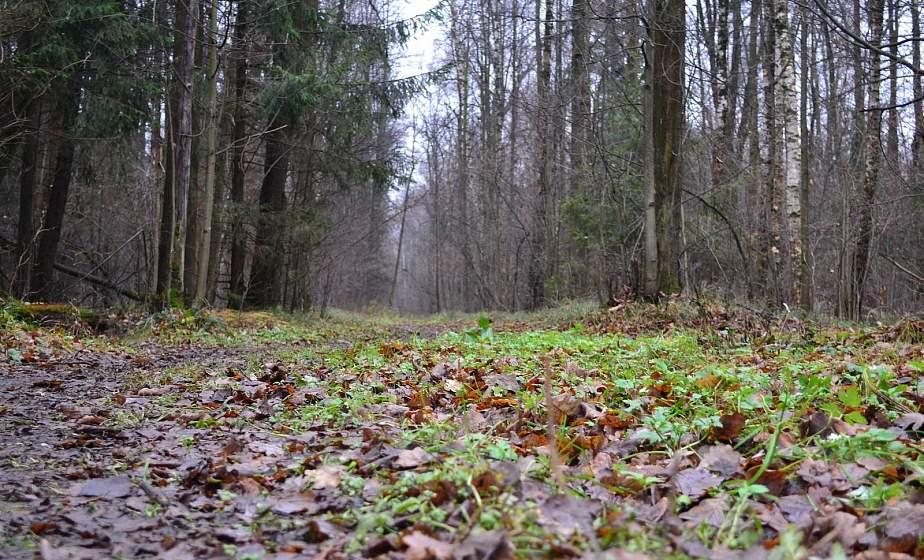 В Лиде почти две недели искали пропавшего молодого человека. Все это время он жил в лесу