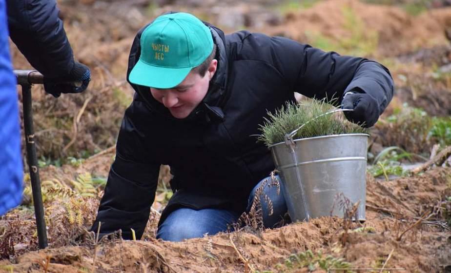 Гродненская область в 2020 году приросла 4600 гектарами леса