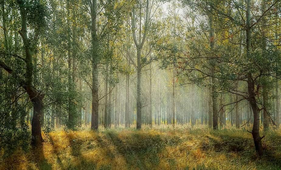 Неделя леса пройдет в Беларуси 13-20 апреля