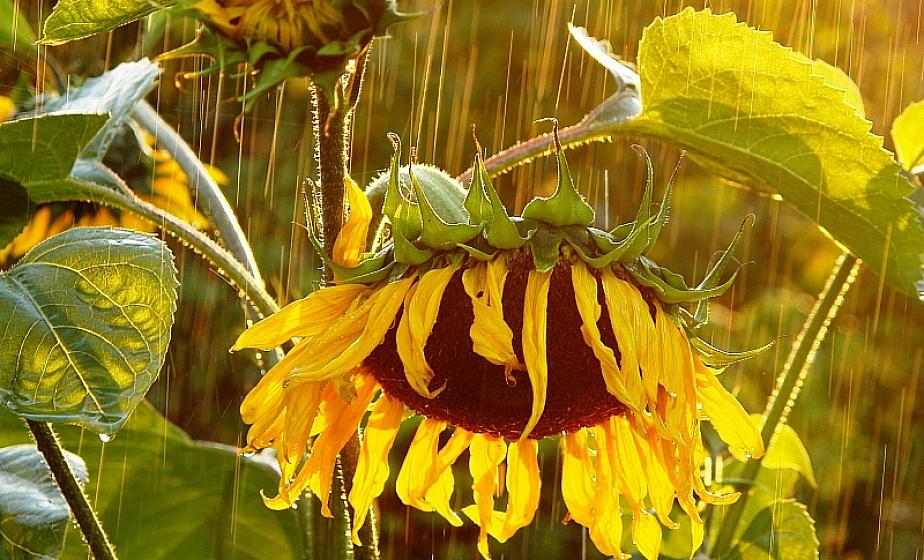 Дожди и грозы разбавят 30-градусную жару в Беларуси 17 июня