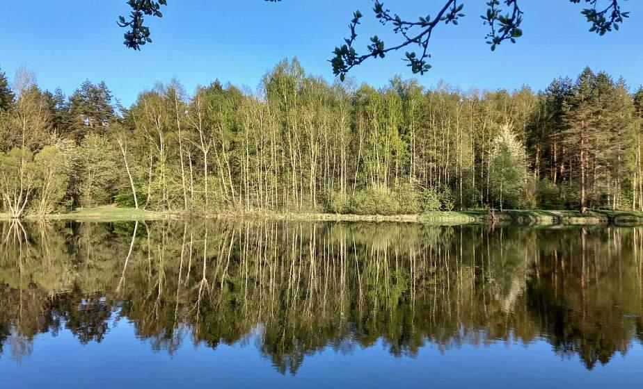 За городом красота: небо и лес отражаются в воде, и деревья как живые. Первые теплые пейзажи поздней весны