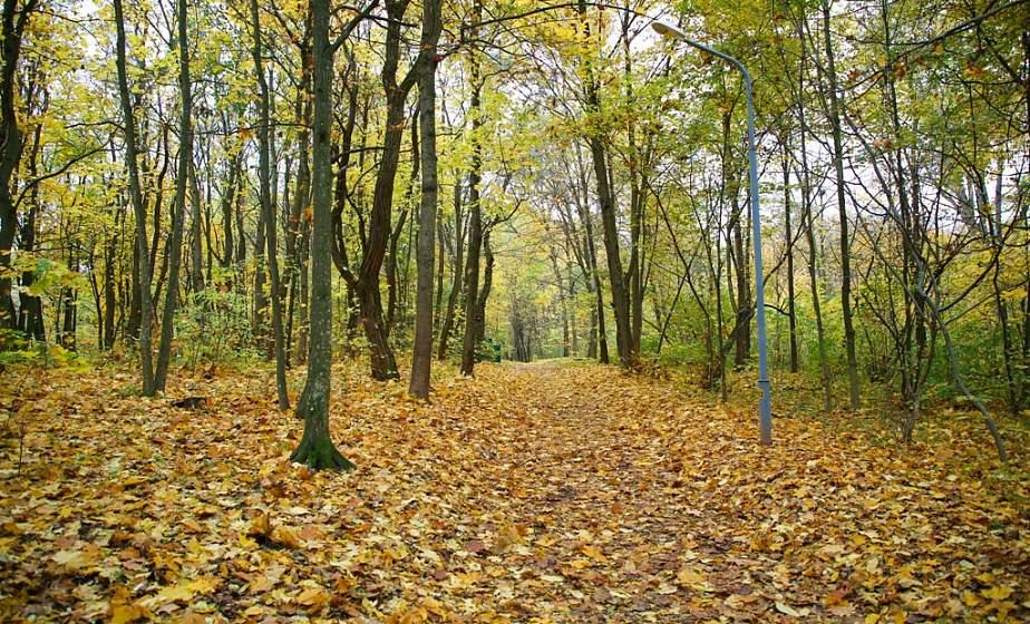 Сказочные пейзажи, золотое панно из листьев и ярко-рыжая белка. Фотопрогулка по осеннему Румлевскому парку