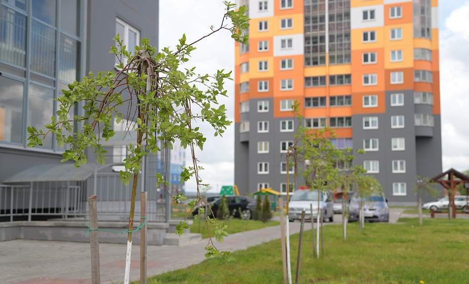 «Сына родили, квартиру построили, теперь садим деревья». Как жители Колбасино озеленяют свой микрорайон (+видео)