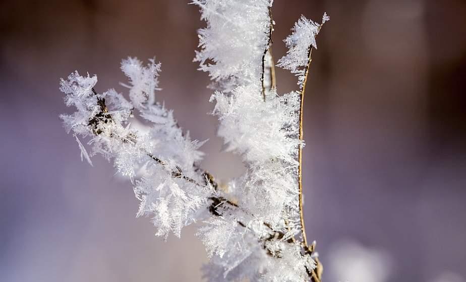 Сильные заморозки и мокрый снег. Какая будет погода в Беларуси на следующей неделе