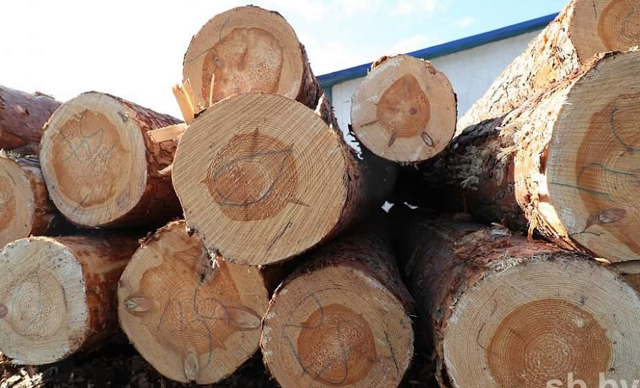 Минлесхоз предлагает внедрять систему электронного учета древесины поэтапно до конца 2021 года