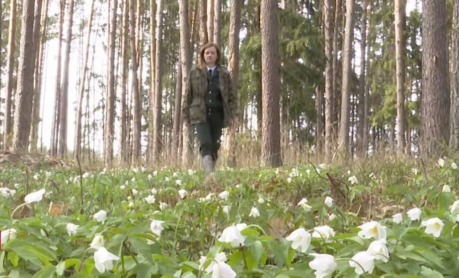 """""""Под наблюдением 8 тысяч гектаров леса"""". Как работает единственная в Дятловском районе женщина-лесничий"""