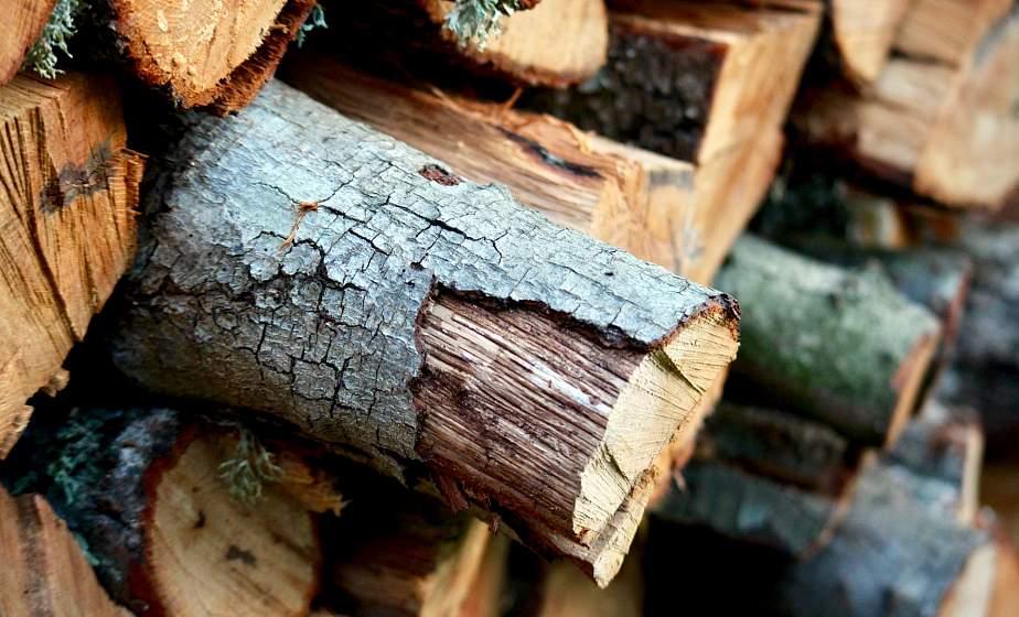 """КГК проведет """"горячую линию"""" по установлению фактов незаконной заготовки древесины"""