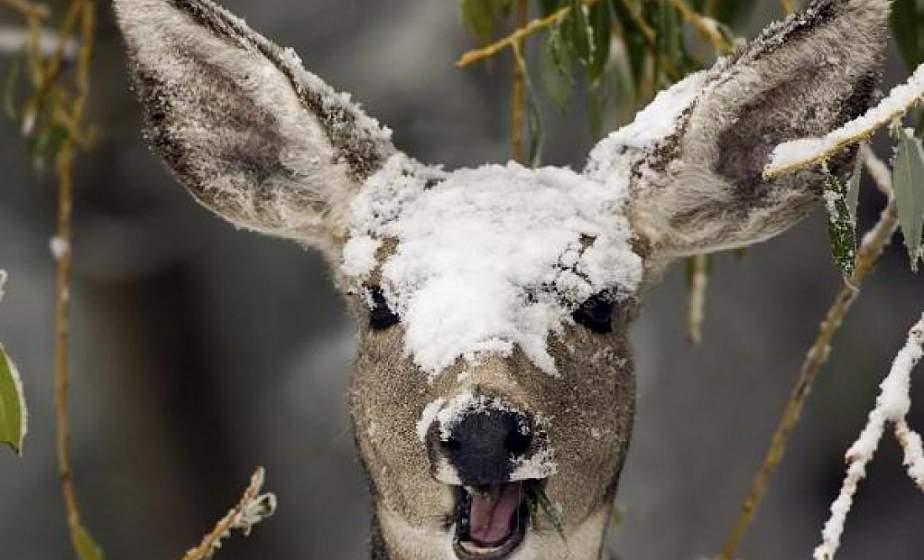 В Гродненском районе диких животных будут подкармливать всю зиму