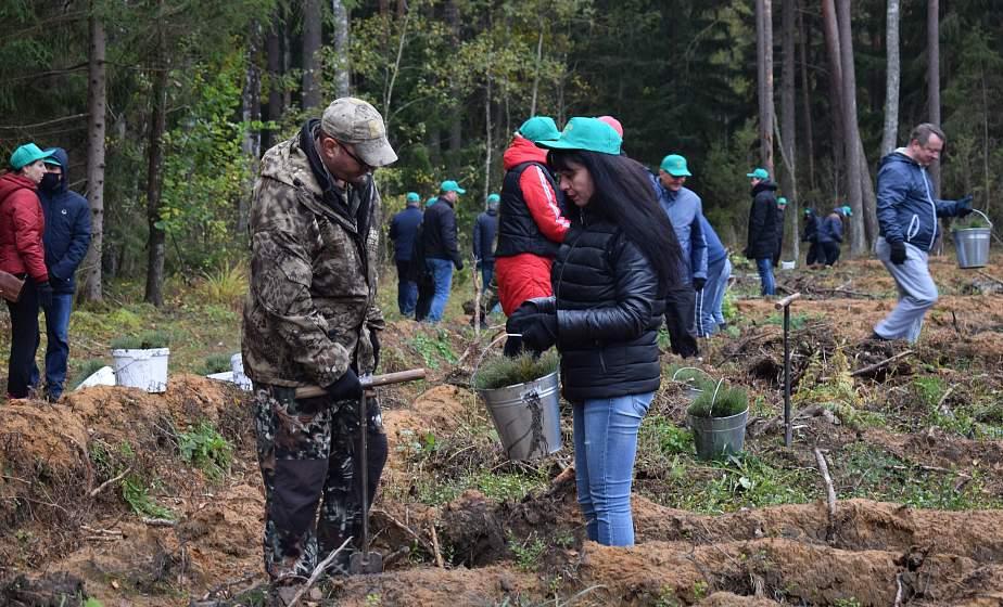 Высадили более 10 000 молодых деревьев. Сотрудники Комитета госконтроля Гродненской области присоединились к акции «Чистый лес»