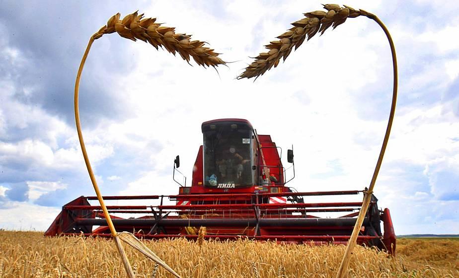 Хлеборобы Гродненщины намолотили почти 1150 тысяч тонн зерна