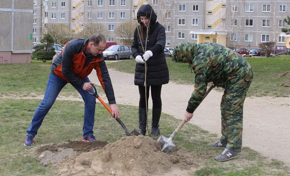 1700 молодых деревьев для города. Где в Гродно появятся новые скверы и аллеи
